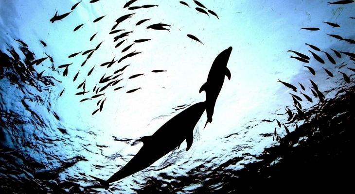 Воплощение в теле дельфина на планете Земля